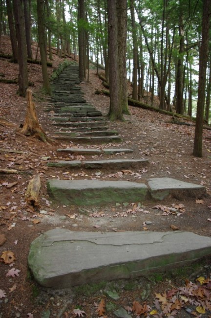 Stairs through the woods.