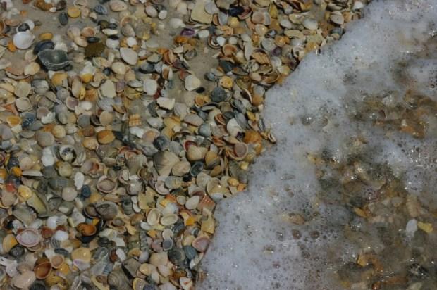 Shells on the seashore.
