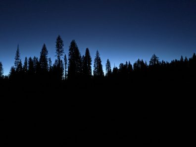 I love the early evening, pine silhouette glow.