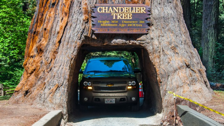 Can You Still Drive Your Car Through a Redwood Tree?
