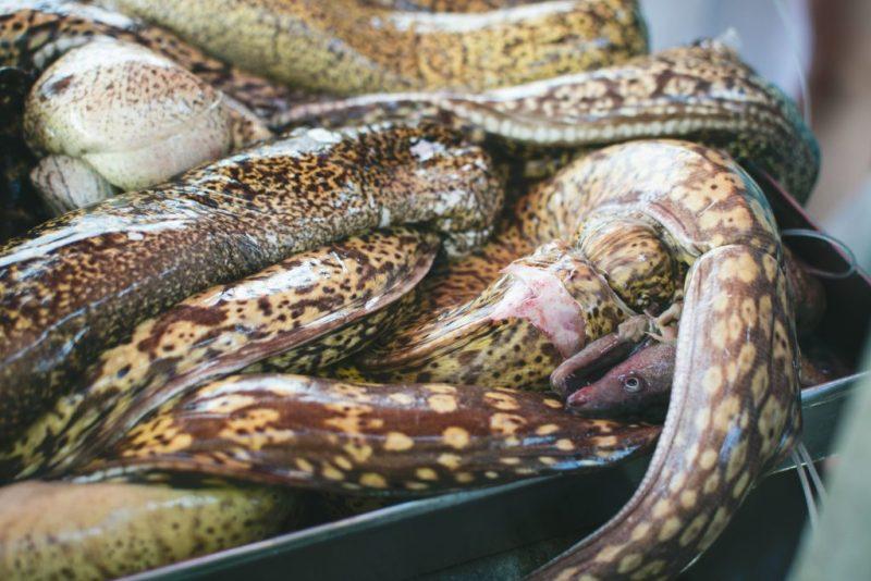dangerous creatures in lake michigan