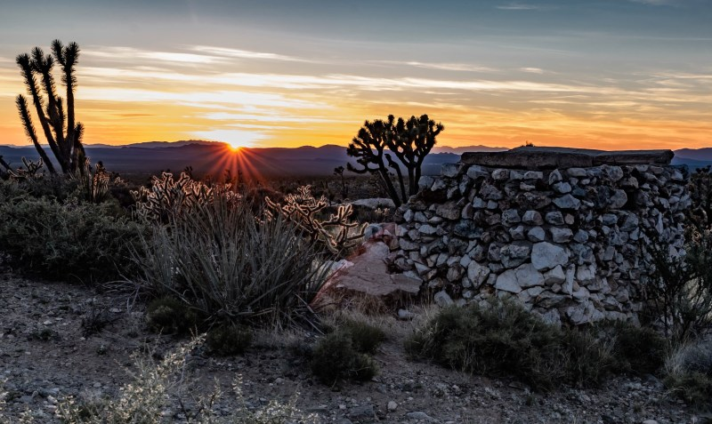 Cactus in the Mojave National Preserve at sunset.
