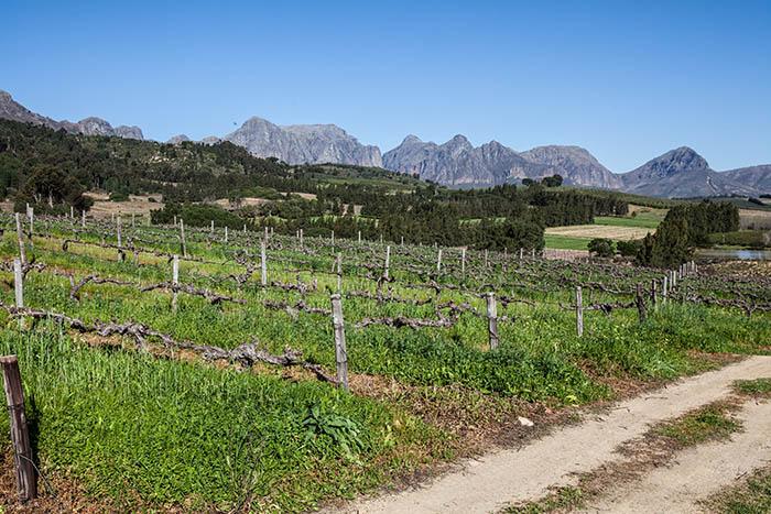 Druk My Niet Wine Estate, Paarl
