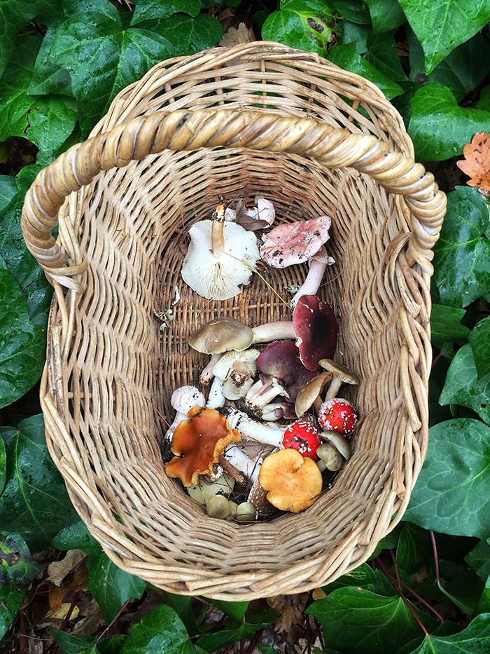 A mushroom forage at Delheim, Stellenbosch, South Africa