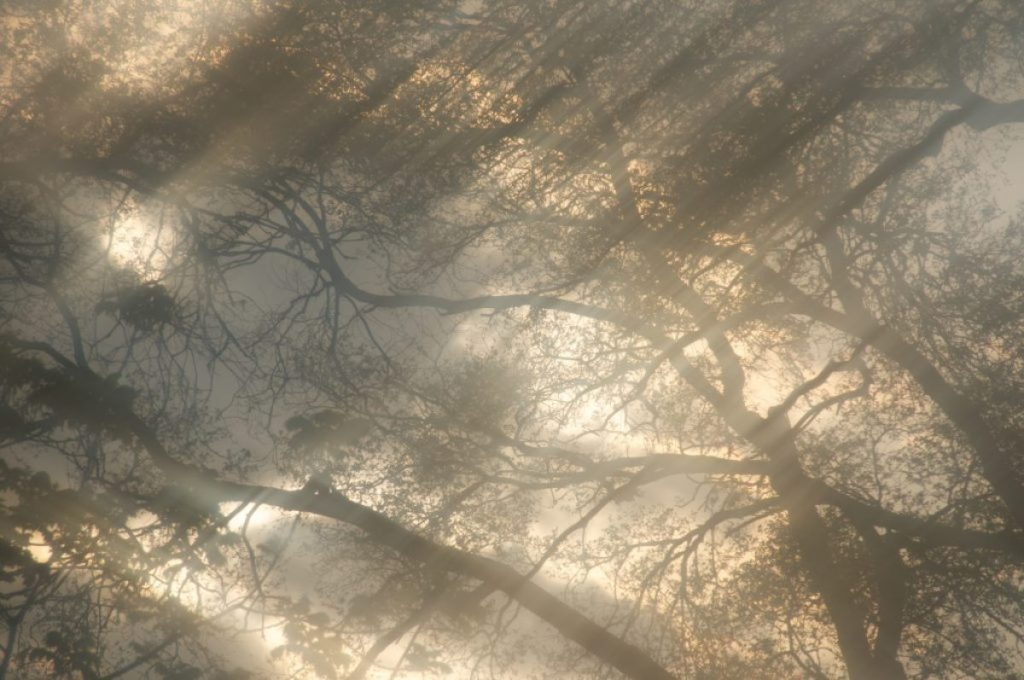 Ethereal photograph of trees, sky, sun, clouds