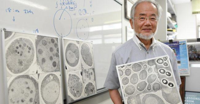24nov2016-yoshinori-ohsumi-ganhou-o-nobel-gracas-a-suas-descobertas-sobre-a-autofagia-um-processo-de-reciclagem-celular-148001619917