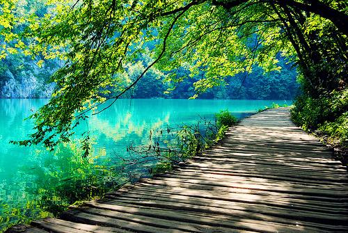 beautiful-amazing-nature-tree-water-lake-green-color-photo-photography-Favim.com-461737