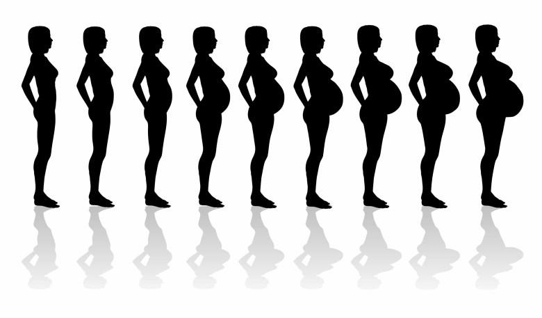 懷孕身形變化