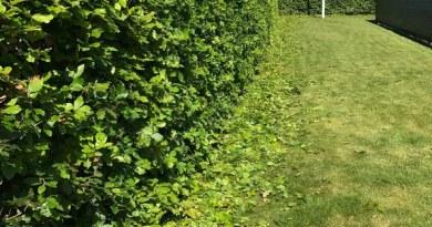 bioklip klippe hæk fjerne haveaffald med plæneklipperen fjern let haveaffald efter hækklipning