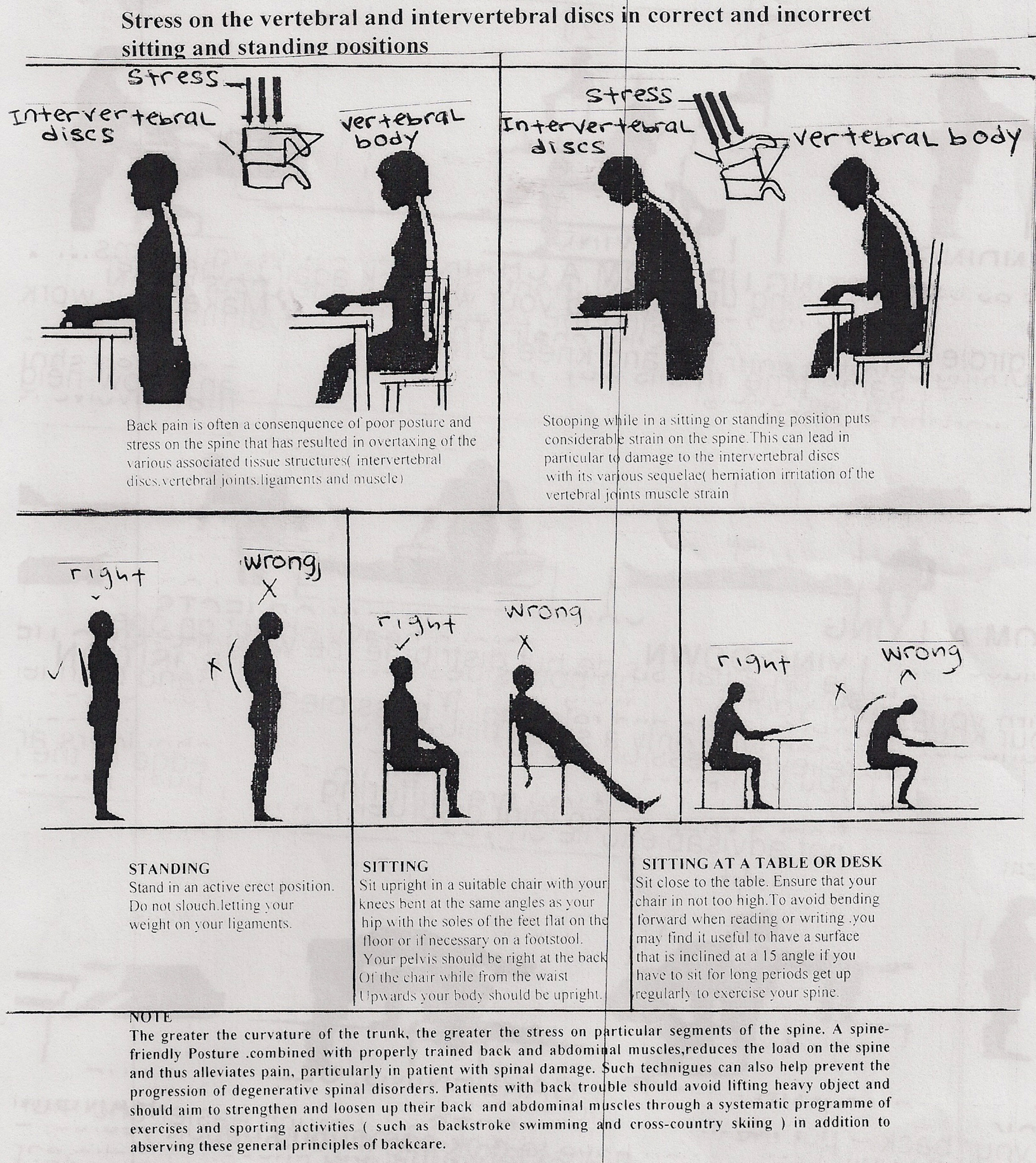 Back Care Exercises Or Physiotherapy