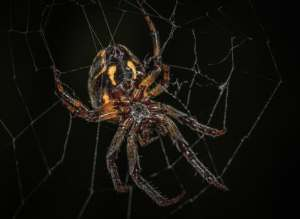 fear of spiders? spider in web