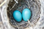 "024 SelfWork: How To Prevent ""Empty Nest"" And Let Go, With Intention"