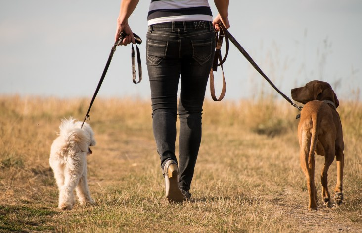 Walking Your Dog | Dr Mc's Veterinary Tales