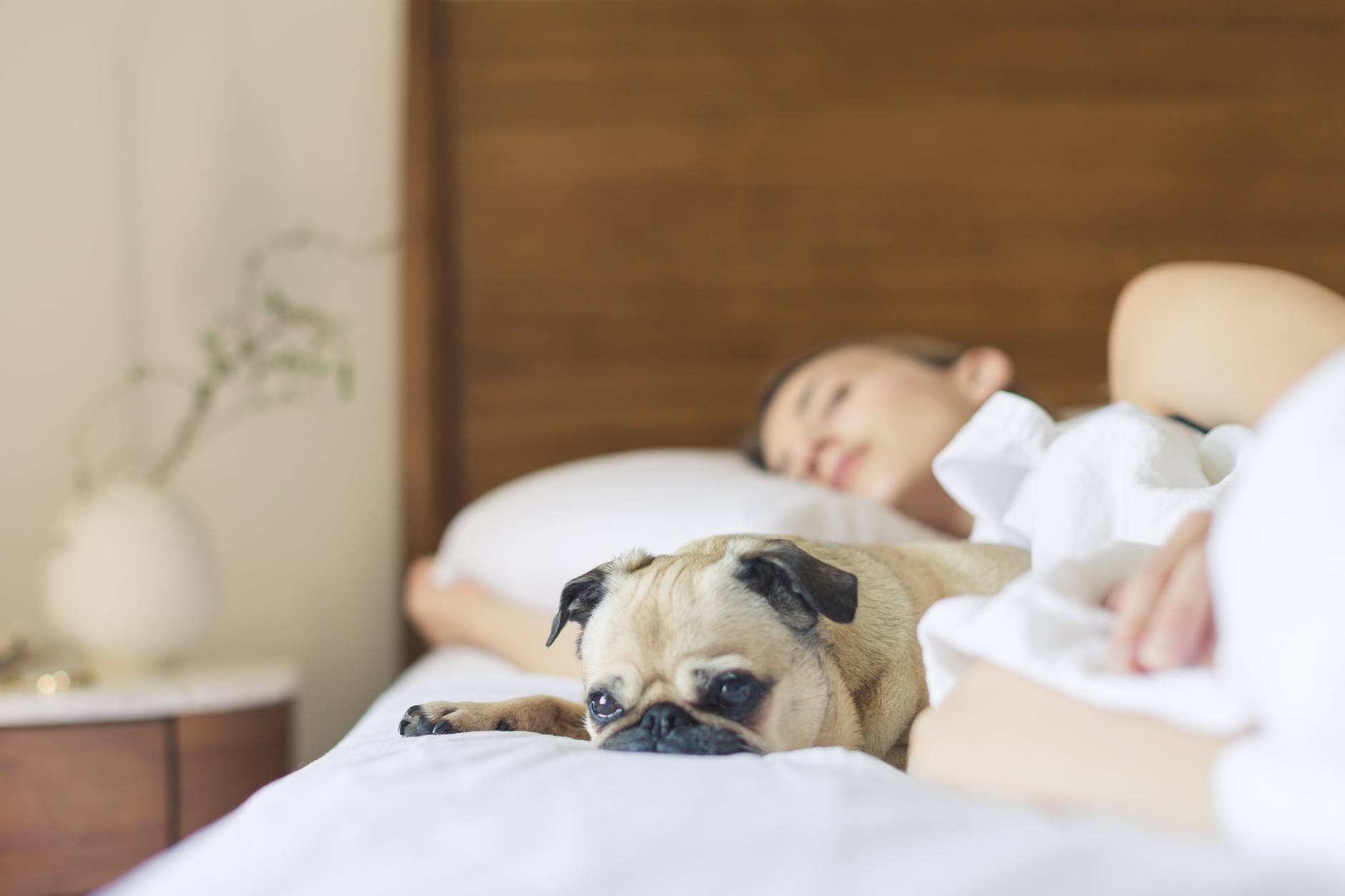 women in bed sleep with dog after taking cannabis for her insomnia
