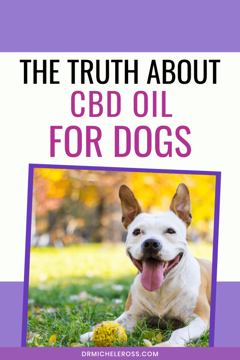 happy dog sitting outside after treatment with cbd oil