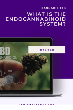close of up of hemp flower containing cannabinoid CBD