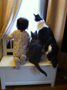 Our toddler and our cats gaze out the birds on the birdfeeder.