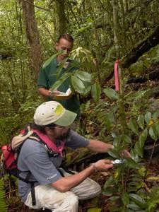 Desde 2004 la División de Investigación Forestal tiene a cargo la producción de plantas en peligro de extinción. De la misma forma, tiene la responsabilidad de establecer nuevas poblaciones de estas especies en los bosques públicos del país y monitorear su establecimiento y desarrollo. En la foto, biólogos de la división tomando datos de flora en peligro de extinción.