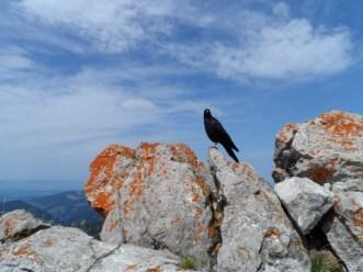 Oiseau - Autriche