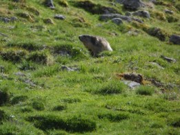 Marmotte - Cantal