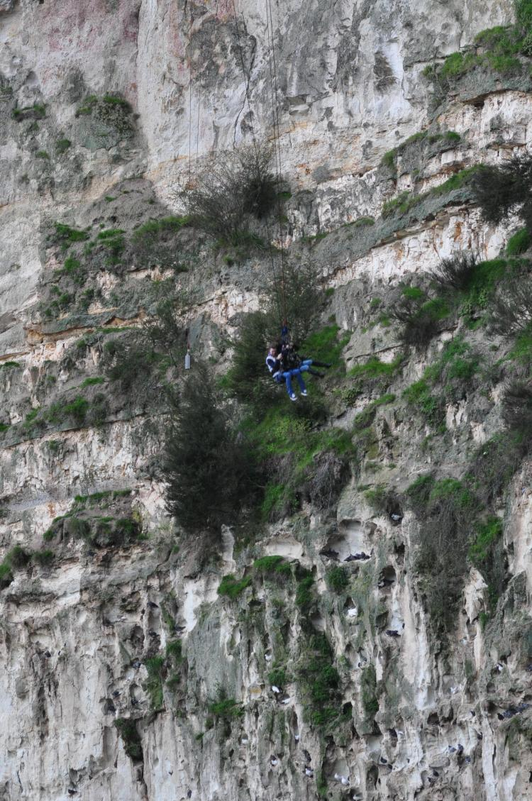 cliff-swing