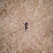 Desert drone las vegas Raf Willems