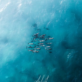 Jim Knight - Dolphins Aerial Photo