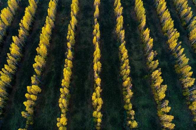Karl Adami - Trees