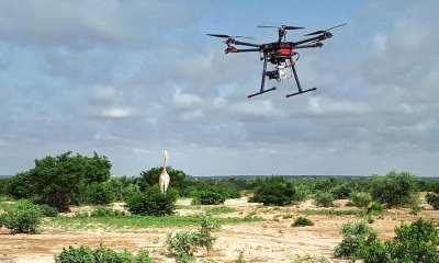Drone Monitoring White Giraffe