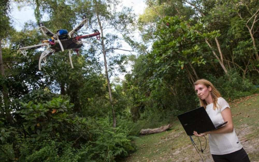 Fornace uses a drone to track the macaques who are known to be responsible for carrying the deadly 'monkey malaria' |