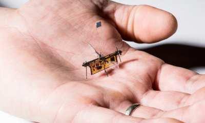 RoboFly is slightly heavier than a toothpick.Mark Stone/University of Washington