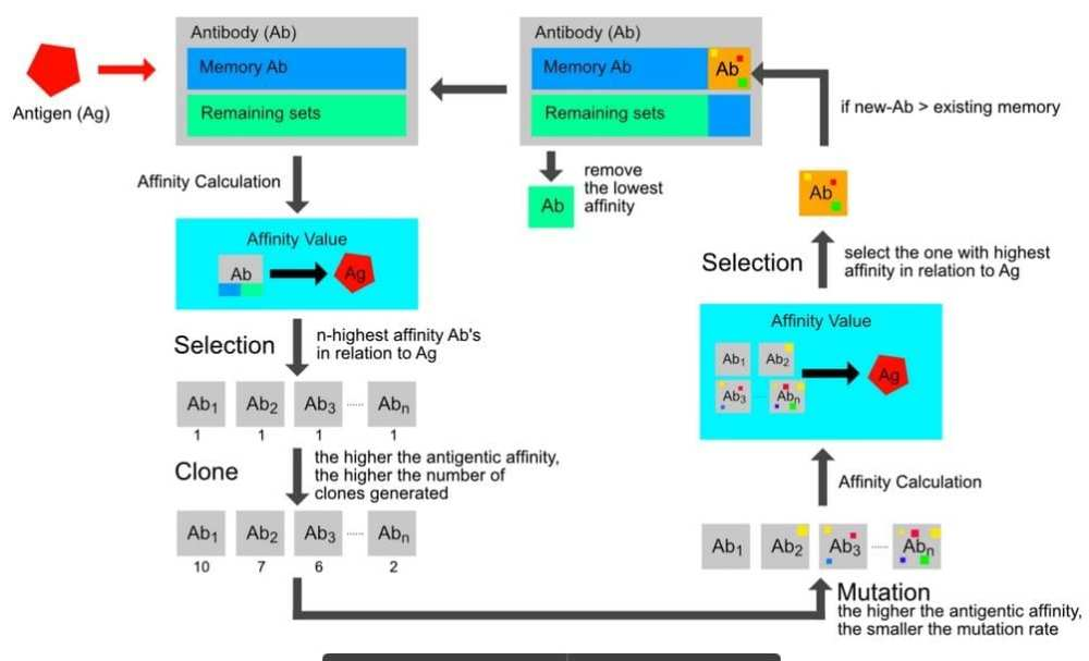 Flow Diagram of Clonal Reproduction (de Castro and Von Zuben, 2002)