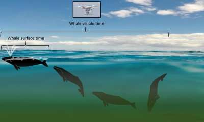 Whale Surface TIme