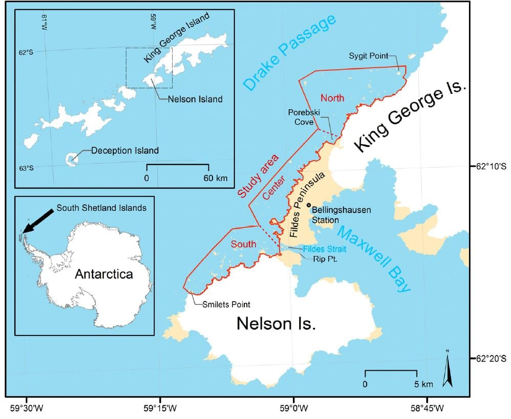 Figure 1. The study area extends for about 30 km along the coast of northwest Nelson Island and southwest King George Island (South Shetlands Islands, Antarctica) and is divided into three subareas (North, Center, South). Maps created with data from the SCAR Antarctic Digital Database.