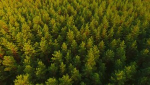 vista aerea drone bosque