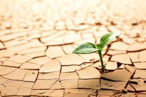 planta creciendo en desierto