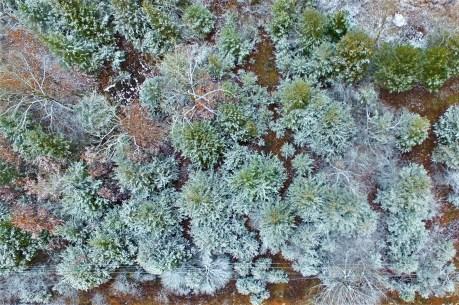 Trees, Johnson - Matt Miller