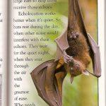Wanda and the Bat
