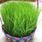 Grow Your Own Easter Grass