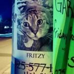 Creepy Cat Shopping
