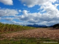 Mount Warning from sugar can fields
