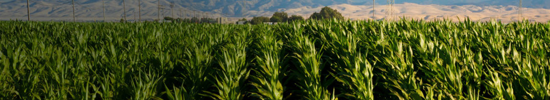 Photo credit: Corn Irrigation, Alamy EA20DB