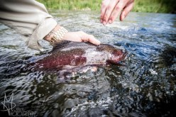 Catch and release trout