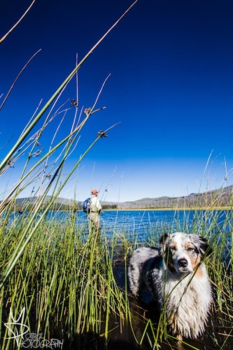Dog and fishing portrait