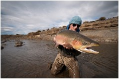 Large wild rainbow trout on fly