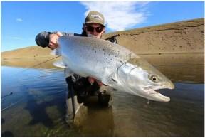 Sea trout images