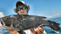 sea bass georgia