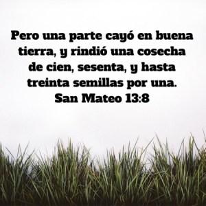 Mateo 13.8