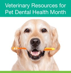 97  Your pet might need a  teeth cleaning – Jan 31, 2019