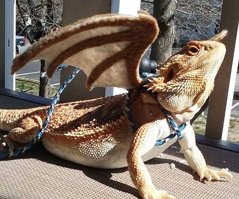 106 Veterinary Care of Dragons